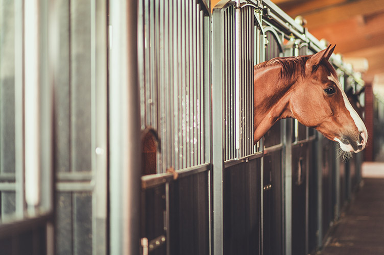Side angle view of a horse in a stable